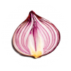 Onion Search Engine