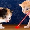 Laser Pointer for Cat