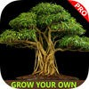 Easy Bonsai Tree For beginners