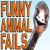 Funny Animal Fails: Just In Time For Election 2016    Fail Army