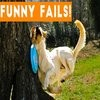 TRY NOT TO LAUGH at FUNNY PET FAILS 2017   Funny Pet Videos