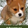 Adventure of my Corgi (A Learn to Read Picture Book for Kids)