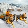 Snow Dog Sledding Transport